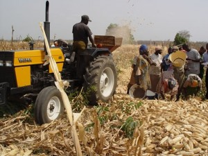 Farmer on tractor in Nigeria