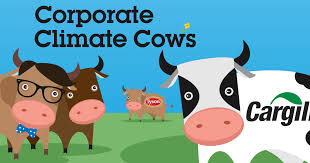 corporate cows